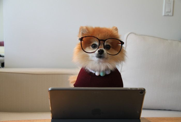cute dog sitting at laptop